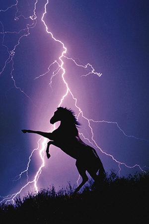 1750-1227lightning-and-silhouette-of-a-horse-posters